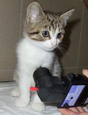 algometer kitten mechanical nociceptive threshold measurement topcat metrology