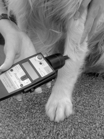 topcat metrology dog algometer